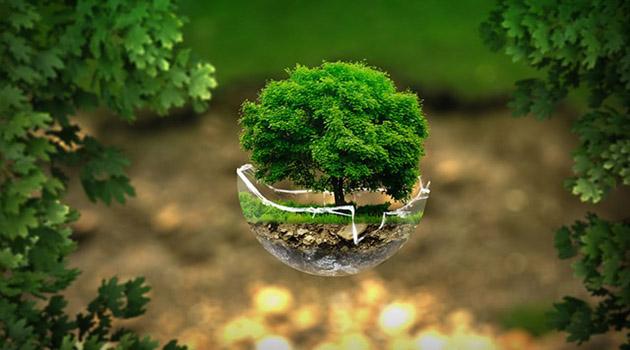 Эколого-биологическая олимпиада