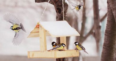 хранители птиц